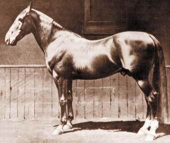 Horsewyse Breed Faq The Standardbred