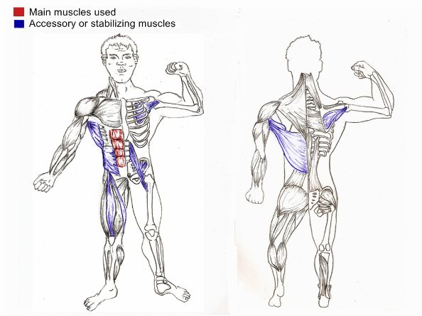 how to build up oblique muscles