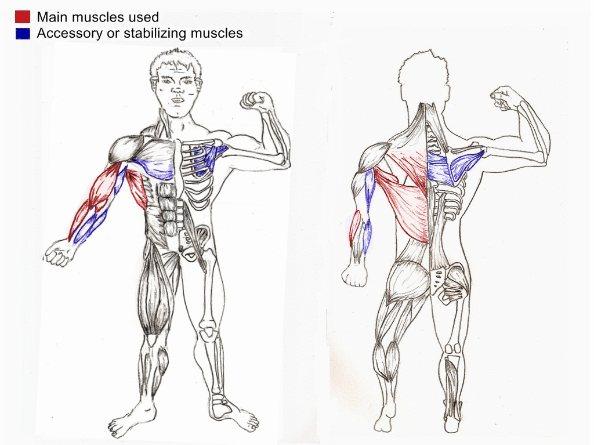 Chin ups Upper Body Strength Exercise